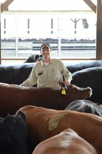 Ken Beever with his cattle