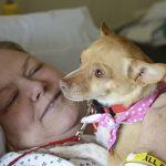 Abandoned as a puppy, therapy dog proves what Chihuahuas are made of