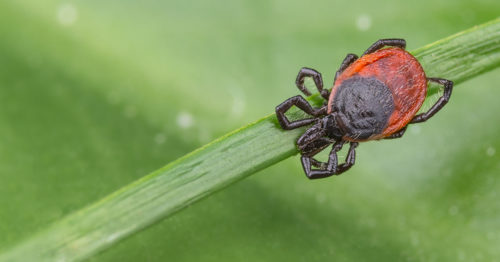 Ticks: Myth vs. Fact