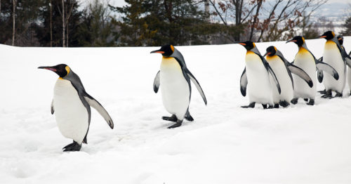Take it slow on the ice and walk like a penguin