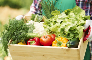 Bushel basket of garden vegetables