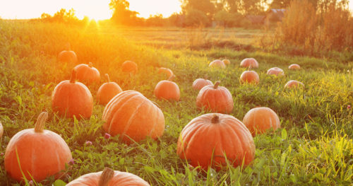 9 reasons to add pumpkin to your diet