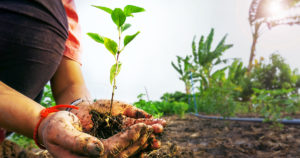 part body of young farmer hands holding a seedling in blurred nature background.