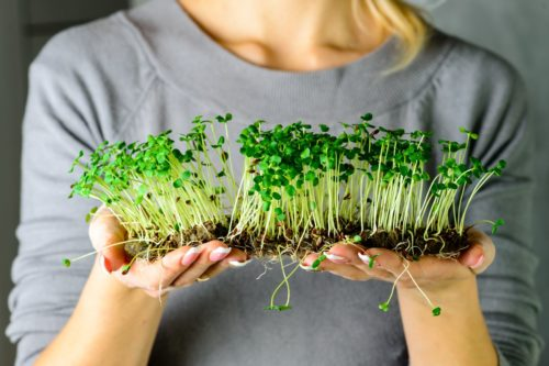 Microgreens: Big nutrients in a small plant